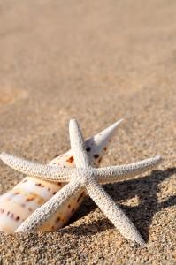 sea-star-1373301-m